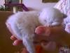 Lilly - 2 Wochen alt